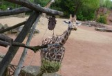 2017-05-04 Zoo Hannover 057-be-kl