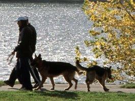 Utazz kutyával – a Balaton régióban is