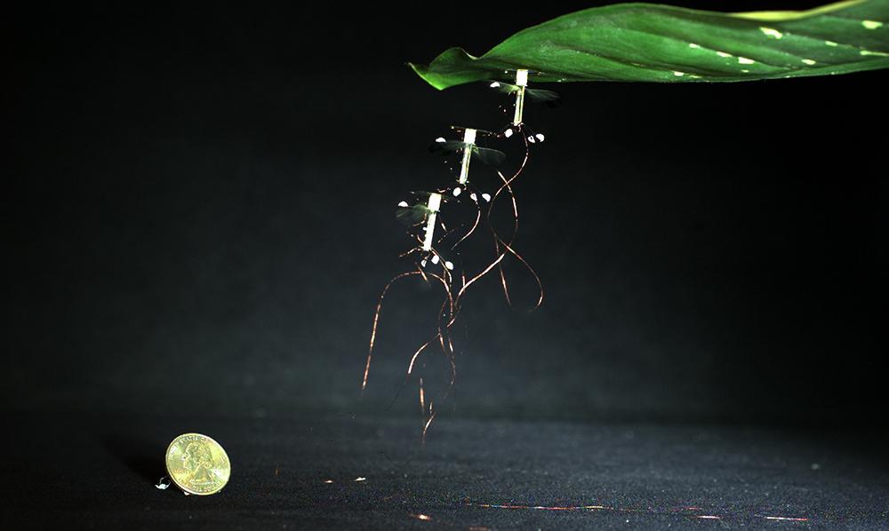 RoboBee: el Dron pequeño tamaño insecto