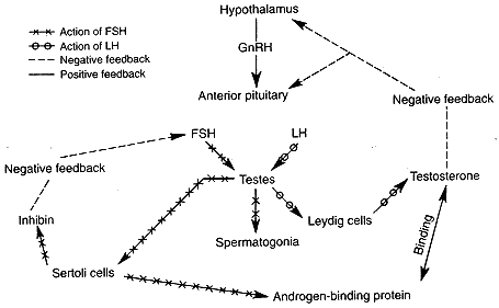 PCT (Post Cycle Therapy)ΓΙΩΡΓΟΣ ΤΟΥΛΙΑΤΟΣ  Η Σωματοδόμηση με