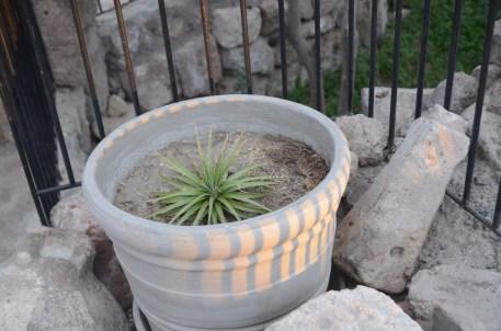 Cactus at night fall at Convent Santa Catalina, Arequipa