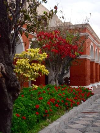 Flowers at Convent Santa Catalina, Arequipa