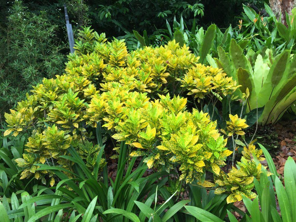 シンガポール国立蘭園_蘭