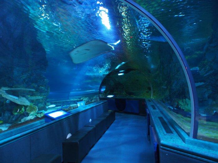 トンネル式水族館