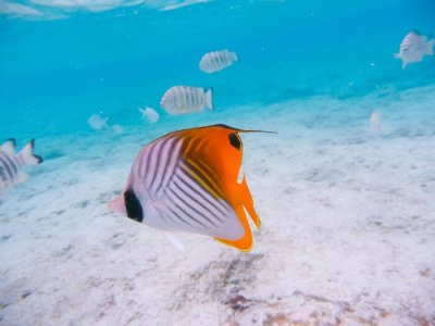 グアムの熱帯魚