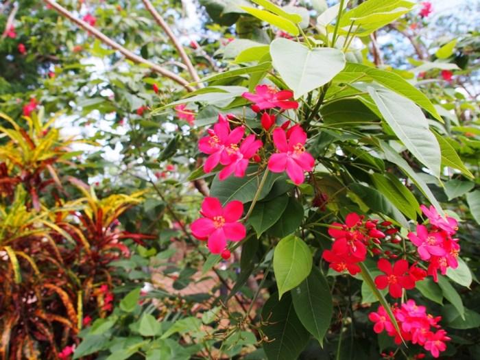 グアムの花