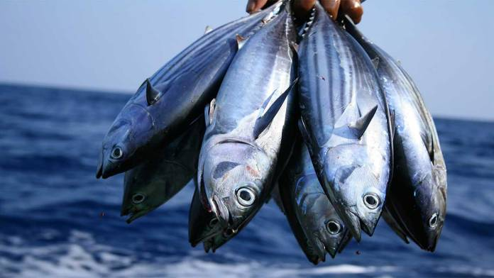 Stakeholders task FG on improved fisheries management 1