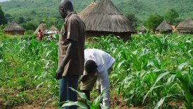 Image result for Nigerian farmers