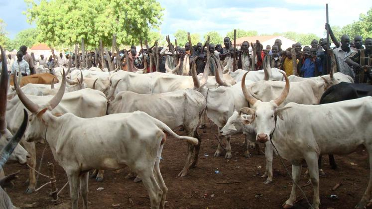 Image result for Masari insists on dialogue as best solution to cattle rustling