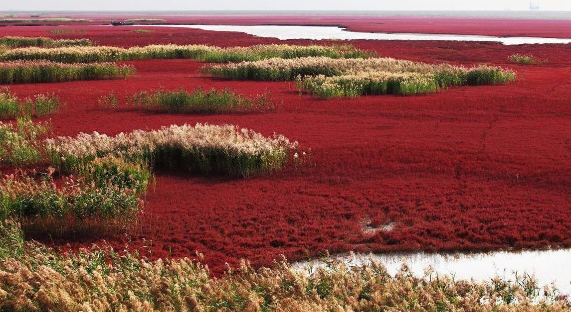 panjin red beach 14 e1512566434157 - Beautiful Lakes You Never Knew About