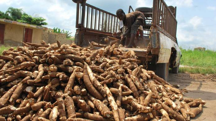 Requirements for starting small-scale gari processing businesses in Nigeria | 6