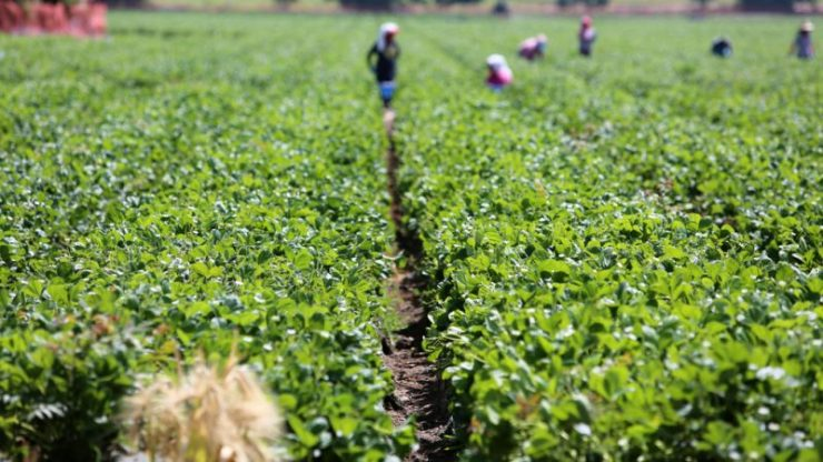 'Why youths should embrace agriculture as course of study'