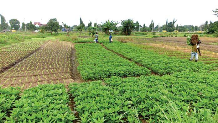 Vegetable farmers in Lagos