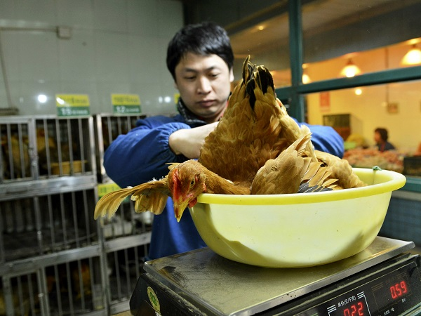 Scientists Fear Bird Flu Pandemic is About to Strike