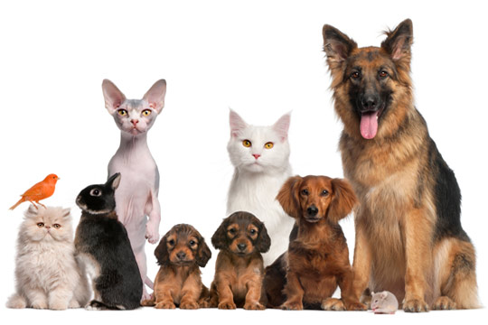 Business Climate for National Pet Industry Definitely Not in Doghouse
