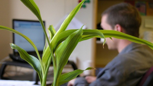 Potted Plants Boost Productivity