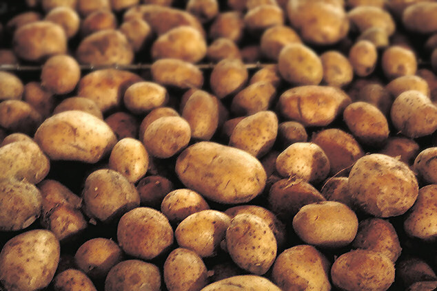 New GMO Potato Approved for Sale