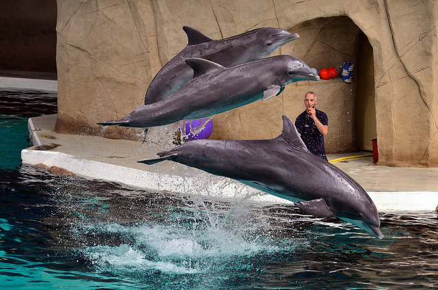 Dolphinaris Arizona Inspected by USDA Four Times Found No Violations