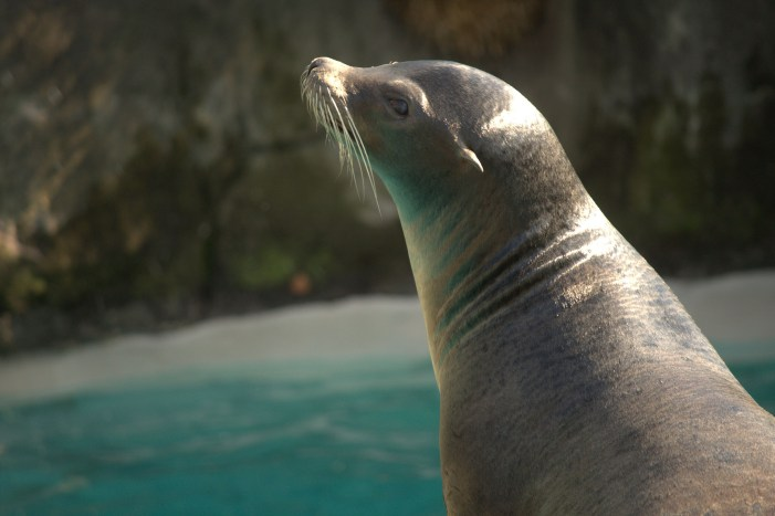Zoey the 24-Year-Old Sea Lion Euthanized at Pittsburgh Zoo