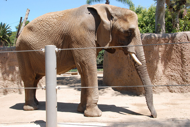 Flavia the Elephant Held in Solitary Confinement at Zoo for 43 Years Dies