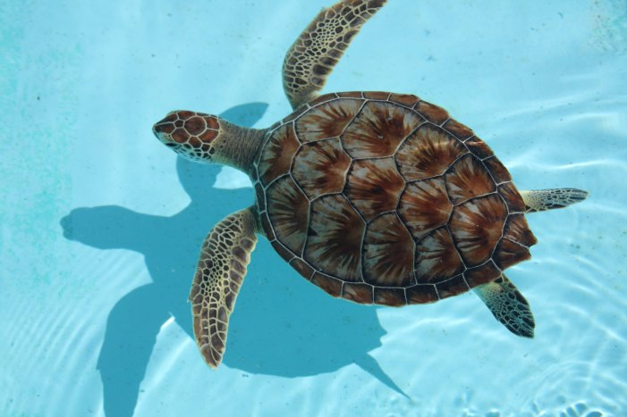 Sea Turtles Are Attracted to the Smells Plastic Emmits