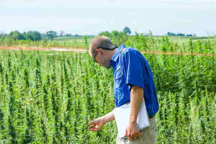 Growing Herbal Medicine Can Yield Extraordinarily High ROI Per Acre