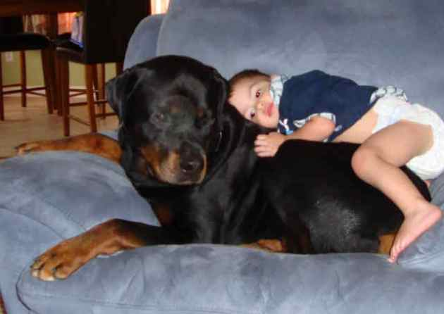 Ethan then climbed on top of Diesel and insisted he was taking his nap right there. I took another photo, told him again how cute he was, but that it was really time for a nap now.