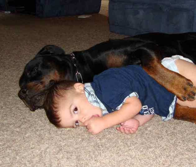 Ethan made as far as the floor and Diesel of course followed. Ethan then snuggled up to Diesel again. It is nearly impossible to be the responsible parent when your kids and dogs are this cute!