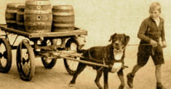 historic rottweiler