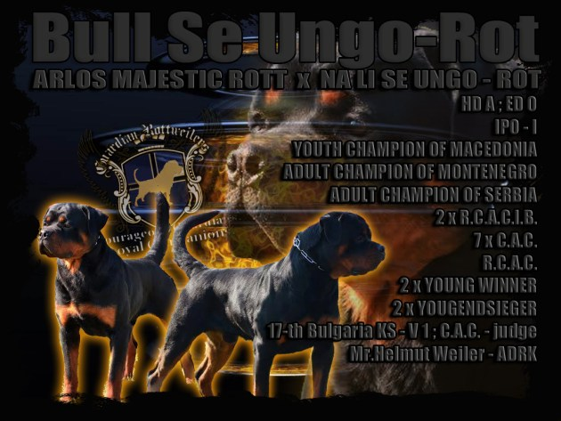 Bull_Card1