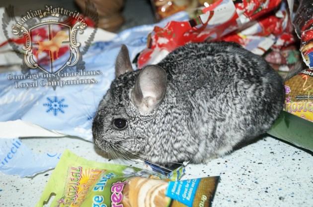 ChristmasMorning_2014_80