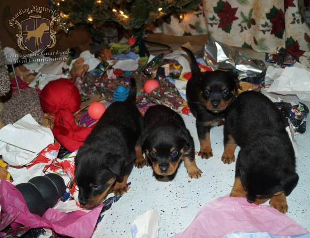 ChristmasMorning_2014_9935