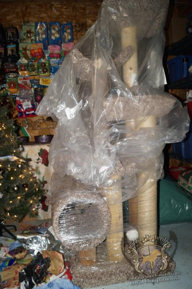 ChristmasMorning_2014_9956