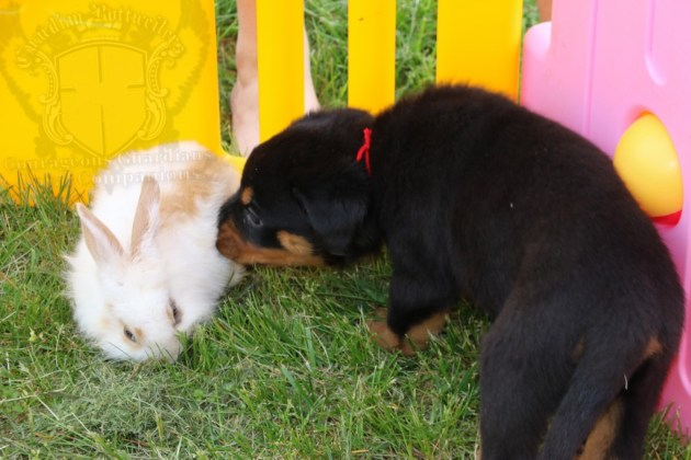BunniesGeesePuppies42
