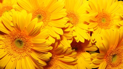 yellow_flowers