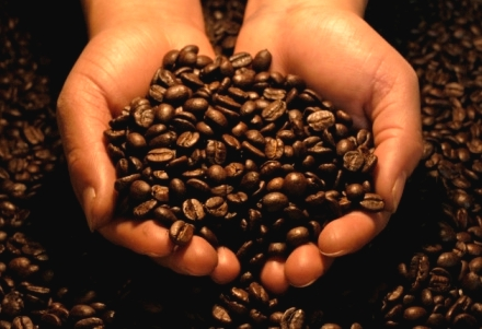 Guatemala Mountain Reserve  The finest specialty coffees direct from Guatemala