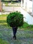 walking bush