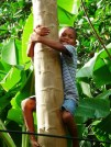 climbing a papaya tree