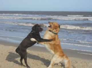 Perros jugando - Foto enviada por Sebastián.