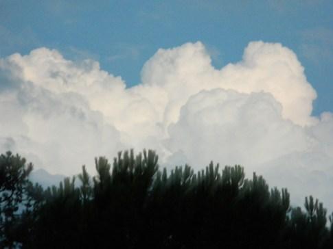 Nube de algodón - Fotos de Matías