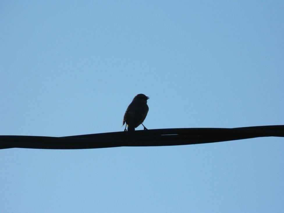 Pájaros - Fotos de Matías