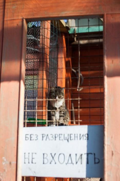 Кошечки приюта