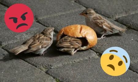 почему, птицы, хлеб
