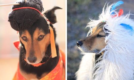 Пес, Герик, собака