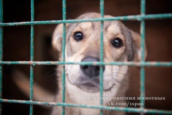 в Карелии закрывают приют для животных