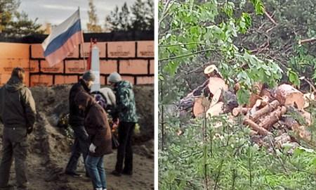 Петрозаводчане заметили новые вырубки деревьев в Каменном боре