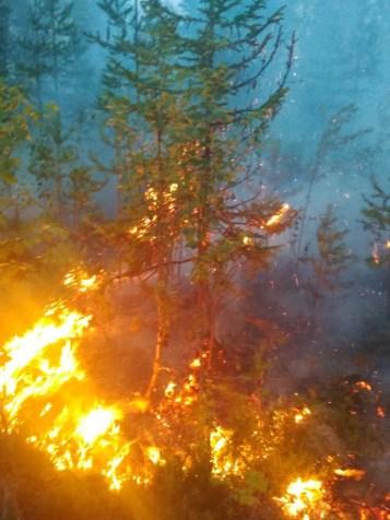 леса горят в карелии