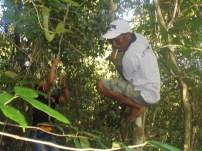 WarWarga gang rambutan mencari dan memilih akar-akar yang layak diambil di Sarasah Batimpo, Solok, pada 9 April 2017 lalu. (foto: Koleksi Pak Irwin)ga gang rambutan mencari dan memilih akar-akar yang layak diambil di Sarasah Batimpo, Solok, pada 9 April 2017 lalu. (foto: Koleksi Pak Irwin)