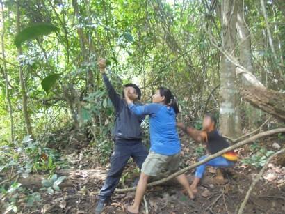 Warga gang rambutan mencari dan memilih akar-akar yang layak diambil di Sarasah Batimpo, Solok, pada 9 April 2017 lalu. (foto: Koleksi Pak Irwin)