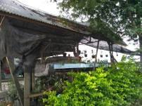 Taman di salah satu pekarangan rumah warga di Kelurahan Kampung Jawa, Kota Solok